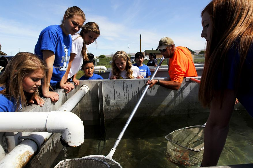 Todd Newsome, salmon biologist for the Yakama Nation, right, helps students from La Salle High School retrieve thousands of juvenile salmon May 22, 2014 from the school's fishery tanks in Union Gap, Wash. The salmon were released into Ahtanum Creek west of Yakima, Wash.   (AP Photo/Yakima Herald-Republic, Mason Trinca)