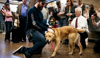 U.S. Marine Corps veteran Sergeant Deano Miller, left, is reunited with military working dog Thor, a yellow Labrador with whom Deano served with in Afghanistan Thursday, May 22, 2014, at Seattle-Tacoma International Airport in SeaTac, Wash. Thor was adopted by Cpl. Miller, ensuring his retirement in the U.S. and his reintegration into a home after a lifetime of service to his country. (AP Photo/seattlepi.com, Jordan Stead)