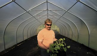 Lee Hecimovich holds squash plants as he stands among tomatoes and artichokes already planted in his seasonal high tunnel on Friday, May 23, 2014, in Palmer, Alaska. The USDA's Natural Resource Conservation Service offers financial assistance to growers using the tall hoop houses to extend growing seasons, and has awarded more funding to Alaska for them than any other state. (AP Photo/Dan Joling)