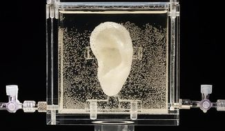 Undated picture shows an ear made of human cells grown from samples provided from a distant relative from Dutch artist Vincent van Gogh, in the center for art and media in Karlsruhe, Germany, Tuesday, June 3, 2014.  US based artist Diemut Strebe said she wants to combine art and science with the installation. (AP Photo/Diemut Strebe.Sugababe)