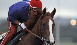 California Chrome, with exercise rider Willie Delgado in the saddle, gallops in the rain at Belmont Park race track in Elmont, NY., Thursday, June 5, 2014.  (AP Photo/Garry Jones)