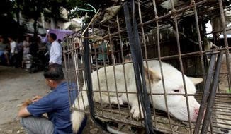 ** FILE ** In this June 23, 2013, file photo released by the Human Society International, a dog waits to be sold for meat in a market in Yulin, in southern China's Guangxi Zhuang Autonomous Region. (AP Photo/Humane Society International, File)