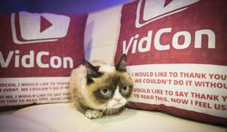 """IMAGE DISTRIBUTED FOR FRISKIES - Friskies® """"official spokescat,"""" Grumpy Cat helped announce the third annual """"The Friskies"""" awards, for the best Internet cat videos of the year, during VidCon at the Anaheim Convention Center, Friday, June 27, 2014, in Anaheim, Calif. Fans can enter """"The Friskies"""" at www.TheFriskies.com. (Bret Hartman/AP Images for Friskies)"""