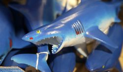 In this July 2, 2014 photo, a bin is filled with plastic toy sharks in a souvenir shop in Chatham, Mass. With growing sightings of great white sharks off Cape Cod, local entrepreneurs are feeding the frenzy with their shark-themed memorabilia and apparel. (AP Photo/Steven Senne)