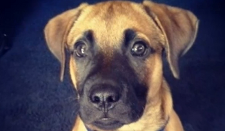 Witnesses in a Chicago suburb say a police officer shot and killed 1-year-old shepherd-mix Apollo in front of his 6-year-old owner Friday afternoon. (NBC 5)