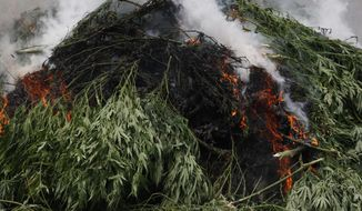 Officers with the Grundy County Sheriff's Department burn a pile of marijuana on Thursday, July 31, 2014, in Altamont, Tenn. State and local officials cut down an estimated 30,000 to 40,000 large marijuana plants found on a Grundy County tree farm. (AP Photo/Chattanooga Times Free Press, Dan Henry)