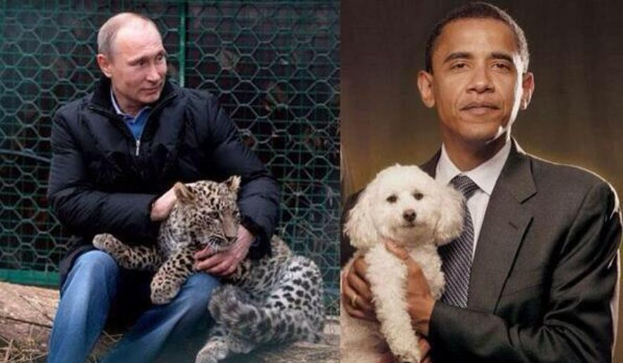 A tweet allegedly from the Russian deputy prime minister shows conflicting images of Vladimir Putin and PResident Obama.