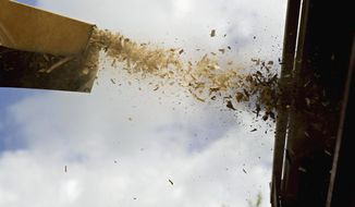 In this July 16, 2014 photo, a wood chipper sprays debris from an ash tree into the back of a truck in Plainfield, Ill., after it was removed from the front of a house. Residents in Will County are seeing massive changes in their municipal treescapes as villages and cities compete for the best ways to remove and replace ash trees infested with the emerald ash borer beetle. The beetle has spread to most communities in the county. (AP Photo/The Herald-News, Rob Winner)  MANDATORY CREDIT