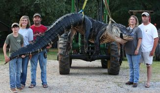 In this Saturday, Aug 16, 2014 photo, A monster alligator weighing 1011.5 pounds measuring 15-feet long is pictured in Thomaston, Ala. The alligator was caught in the Alabama River near Camden, Ala., by Mandy Stokes at right, along with her husband John Stokes, at her right, and her brother-in-law Kevin Jenkins, left, and his two teenage children, Savannah Jenkins, 16, and Parker Jenkins, 14, all of Thomaston, Ala. (AP Photo/Al.com, Sharon Steinmann)