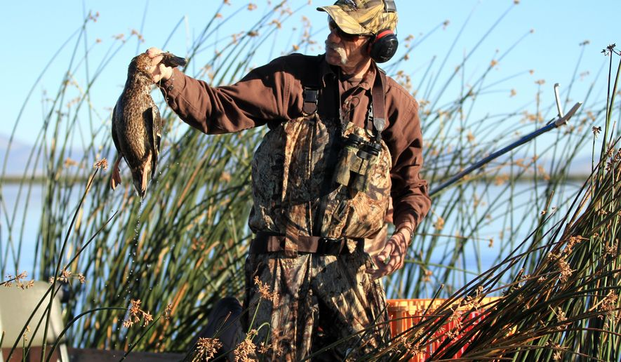 FILE - This Aug. 27, 2012 file photo shows Thornton McCurry holding a dead duck at the Tule Lake National Wildlife Refuge near Tulelake, Calif., during an outbreak of avian botulism. Botulism has returned to the refuge in 2014, and U.S. Fish and Wildlife Service estimates it has killed 10,000 ducks so far. The agency says the outbreak is not unusual, but has been exacerbated by drought. (AP Photo/Herald and News, Steve Silton)