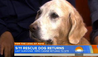 Bretagne, a 15-year-old golden retriever that is believed to be the last surviving search dog from Ground Zero after the Sept. 11, 2001, terrorist attacks, has returned to New York City as a nominee for a hero dog award. (Today.com)