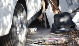 A small dog looks out from beneath a car in the front yard at a home where more than two dozen dogs were killed in an overnight fire in North Las Vegas on Monday, Sept. 29, 2014. Firefighters say at least 41 dogs were killed and 52 survived after the fire. (AP Photo/Las Vegas Review-Journal, Chase Stevens)