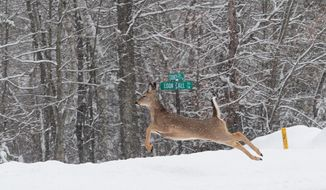 FILE - In this Feb. 17, 2014 file photo, a White-tail deer bounds into a ditch in Lake Shore, Minn. Minnesota officials are encouraging motorists to look out for deer because now is the time of year when they are most active due to harvest, hunting and mating season. (AP Photo/The Brainerd Daily Dispatch, Steve Kohls, File)