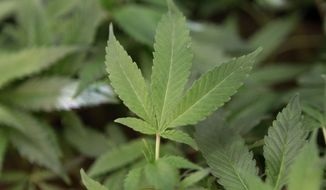 Allowing marijuana legalization in the District leaves the United States vulnerable to charges it is violating international treaties aimed at stemming the drug trade, the nonpartisan research arm of Congress concluded in an analysis that could strengthen the resolve of lawmakers on Capitol Hill to overturn the measure. (Associated Press)