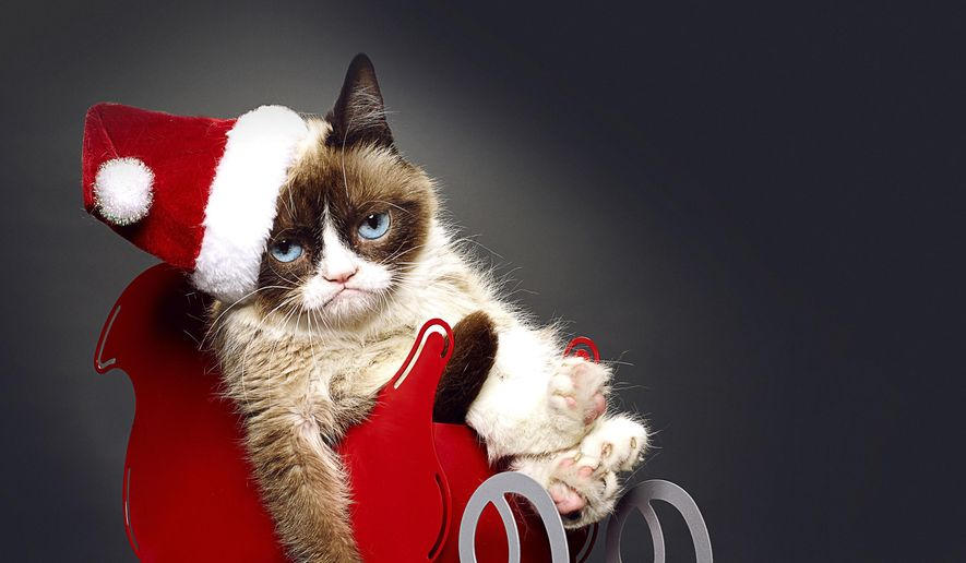 "This undated photo provided by Lifetime shows Grumpy Cat, who stars in the Lifetime network's live-action film ""Grumpy Cat's Worst Christmas Ever."" Before the movie aired on Nov. 29, Grumpy Cat, who owes her permanent frown to a medical condition, was featured in the books ""The Grumpy Guide to Life"" and ""Grumpy Cat: A Grumpy Book."" (AP Photo/Lifetime)"