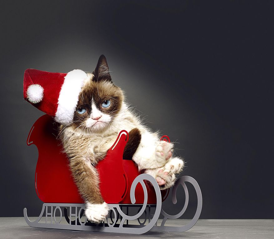 """This undated photo provided by Lifetime shows Grumpy Cat, who stars in the Lifetime network's live-action film """"Grumpy Cat's Worst Christmas Ever."""" Before the movie aired on Nov. 29, Grumpy Cat, who owes her permanent frown to a medical condition, was featured in the books """"The Grumpy Guide to Life"""" and """"Grumpy Cat: A Grumpy Book."""" (AP Photo/Lifetime)"""