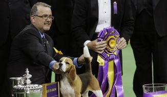 William Alexander poses with Miss P, a 15-inch beagle, after winning the best in show competition title at the Westminster Kennel Club dog show, Tuesday, Feb. 17, 2015, at Madison Square Garden in New York. (AP Photo/Mary Altaffer)