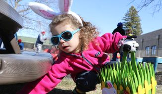 Easter egg hunting for plastic eggs in Illinois. (AP photo / Daily Herald, George LeClaire)