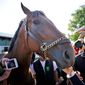 Members of the media touch and photograph Triple Crown winner American Pharoah at Belmont Park on Sunday. The colt will rest, race again and have an avalanche of publicity and money-making opportunities. (Associated Press)