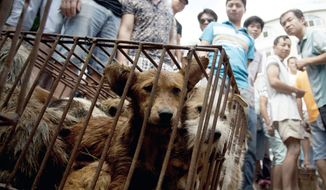 Dogs in cages are sold by vendors at a market during a dog meat festival in Yulin in south China's Guangxi Zhuang Autonomous Region on June 21, 2015. Restaurateurs in a southern Chinese town are holding an annual dog meat festival despite international criticism. (Chinatopix via Associated Press)