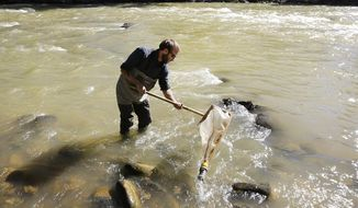 Scott Roberts, an aquatic biologist with Mountain Studies Institute, collects insects out of the Animas River, in Durango Colo., on Sunday, Aug. 9, 2015, to check on their health. MSI has been keeping an eye on the insects starting just before and during the toxic minerals that came down the river from the Gold King Mine on Wednesday. (Jerry McBride/The Durango Herald via AP) **FILE**
