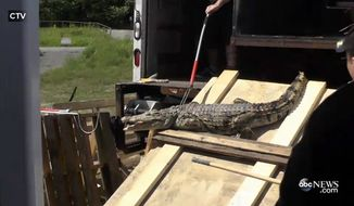 More than 150 adult crocodiles, alligators and caimans were rescued this week from the Toronto home of a man who reported that he could no longer care for them, according to the Indian River Reptile Zoo that took in the animals. (CTV via ABC News)