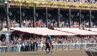 Fans watch Triple Crown winner American Pharaoh warm up at Saratoga Race Course in Saratoga Springs, N.Y., Friday morning, Aug. 28, 2015. American Pharoah is scheduled to run in Saturday's Travers Stakes horse race. (Patrick Dodson /The Daily Gazette via AP)  TROY, SCHENECTADY; SARATOGA SPRINGS; ALBANY AND AMSTERDAM OUT; MANDATORY CREDIT