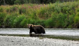 In this August 2015 photo, a bear is visible in a remote river during an eight-day float fishing trip east of Anchorage, Alaska. (Rich Landers/The Spokesman Review via AP)