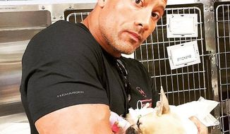 "Dwayne ""The Rock"" Johnson announced Tuesday that he had to make the painful decision to put down his French bulldog Brutus, just weeks after he made headlines for rescuing the dog from a pool. (Facebook/@Dwayne The Rock Johnson)"