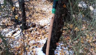 This photo provided by the Alaska Department of Fish and Game shows a homemade spear that a homeless man used to kill a black bear cub that was sniffing around for food in an illegal camp site in Anchorage, Alaska, on Friday, Oct. 2, 2015. (David Battle/Alaska Homeless Man Spears Bear via AP)
