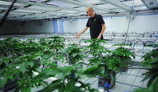 Jonathan Hunt, vice president of Monarch America, Inc., gives a tour of the Flandreau Santee Sioux Tribe's marijuana growing facility Friday, Oct. 16, 2015, in Flandreau, S.D. (Joe Ahlquist/Argus Leader via AP) ** FILE **