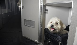 American Airlines allows pets in first class on some trans-continental flights. (Photo courtesy American Airlines/PR)