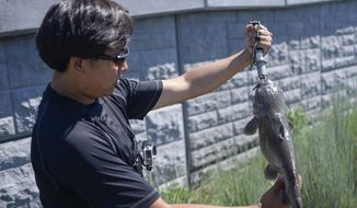 """Leo Sheng weighs a channel catfish along the Schuykill River on July 31, 2015, during a fishing session with his group called """"Extreme Philly Fishing."""" (Ben Mikesell/The Philadelphia Inquirer via AP)"""