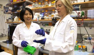 In this photo provided by UC Berkeley Public Affairs, taken June 20, 2014, Jennifer Doudna, right, and her lab manager, Kai Hong, work in her laboratory in Berkeley, Calif. Designer babies or an end to intractable illnesses: A revolutionary technology is letting scientists learn to rewrite the genetic code, aiming to alter DNA in ways that, among other things, could erase disease-causing genes. How far should these experiments try to go _ fix only the sick, or make changes that future generations could inherit? (Cailey Cotner/UC Berkeley via AP)