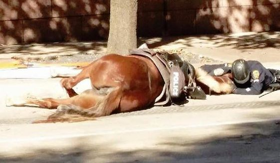 A photo showing a Houston police officer comforting his horse partner during the final moments of her life is going viral. (Facebook/@Animal Justice League)