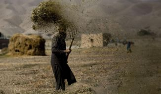In this Nov. 5, 2010, file photo, an Afghan farmer threshes hay in Sangin, Afghanistan. Taliban gunmen have overrun a strategic district in the southern province of Helmand, delivering a serious blow to government forces, Afghan officials said on Monday, Dec. 21, 2015. (AP Photo/Dusan Vranic, File)