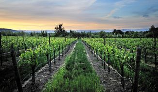 In this photo taken on May 12, 2012, a Rogue Valley sunset casts warm light on a vineyard near Griffin Creek Elementary School in Medford, Ore. (Jamie Lusch/The Medford Mail Tribune via AP) MANDATORY CREDIT