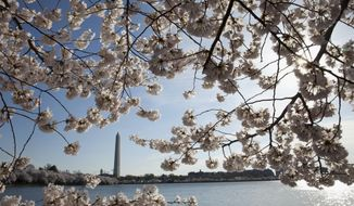 FILE - In this April 11, 2015, file photo, the Washington Monument is seen through cherry blossoms across the Tidal Basin in Washington. The National Park Service (NPS) is now forecasting that March 23-24 will be the start of the peak bloom period for the cherry blossoms in Washington. (AP Photo/Carolyn Kaster, File)