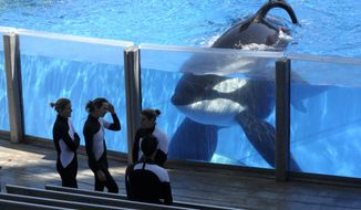 In this Monday, March 7, 2011, file photo, killer whale Tilikum, right, watches as SeaWorld Orlando trainers take a break during a training session at the theme park's Shamu Stadium in Orlando, Fla. SeaWorld is ending its practice of killer whale breeding following years of controversy over keeping orcas in captivity. The company announced Thursday, March 17, 2016, that the breeding program will end immediately. (AP Photo/Phelan M. Ebenhack, File)
