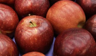 In this photo taken Friday, Feb. 12, 2016, a box of Cosmic Crisp apples is shown at Washington State University's Tree Fruit Research & Extension Center in Wenatchee, Wash. The apple is a brand new trademarked and focus group tested variety developed by the WSU lab over the last 20 years. For at least one decade, it will be available for planting only to Washington farmers. (AP Photo/Ted S. Warren)