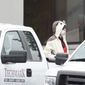 A man wearing a full animal costume and surgical mask walks out of a TV station in Baltimore on Thursday. (The Baltimore Sun via Associated Press)