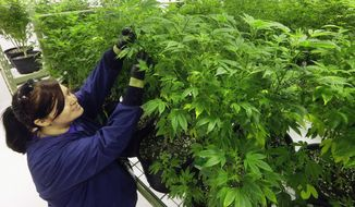 Ashley Thompson inspects marijuana plants at the Ataraxia medical marijuana cultivation center in Albion, Illinois. (Associated Press)