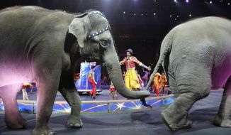 Asian elephants perform for the final time in the Ringling Bros. and Barnum & Bailey Circus, Sunday, May 1, 2016, in Providence, R.I. The circus closes its own chapter on a controversial practice that has entertained audiences since circuses began in America two centuries ago. The animals will live at the Ringling Bros. 200-acre Center for Elephant Conservation in Florida. (AP Photo/Bill Sikes)