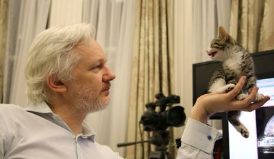 This is an undated handout photo issued by Sunshine Press made available Tuesday May 10, 2016, of WikiLeaks founder Julian Assange with a kitten in Ecuador's embassy in London. (Sunshine Press/Wikileaks via AP)