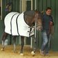 Trainer Keith Desormeaux walks Preakness Stakes hopeful Exaggerator in the stakes barn at Pimlico Race Course Wednesday, May 18, 2016,  in Baltimore following a morning jog. The 141st Preakness Stakes is scheduled for Saturday, May 21. (AP Photo/Garry Jones)