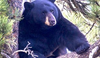 Former Canadian boxer Rick Nelson, 61, fought off a black bear with his bare hands. (National Park Service)