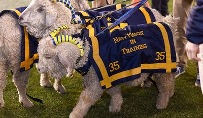 Bill XXXV, the U.S. Naval Academy's mascot, was euthanized after a long battle with various illnesses. He was just two years old. Image via U.S. Naval Academy's official Twitter page.