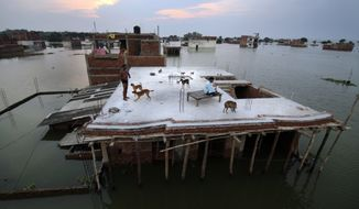 A flood affected person, left, who rescued four dogs and their four puppies plays on the roof of their under constructed submerged house in Allahabad, India, Thursday, Aug. 25, 2016. Heavy monsoon rains have ended two successive drought years in India with the Ganges River and its tributaries rising above the danger level, triggering evacuation of hundreds of thousands of people from flooded homes in north and eastern India. (AP Photo/Rajesh Kumar Singh)