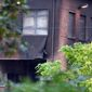 Damage can be seen at the building of the National Criminology Lab in Brussels on Monday, Aug. 29, 2016. Belgian media reported an explosion rocked the building in the early hours of Monday, the cause was not immediately known. (AP Photo/Geert Vanden Wijngaert)