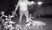 Dr. Norman Muir, the former vice president of academic affairs for Medaille College in New York, is caught on camera stealing Donald Trump yard signs. (WIVB-4 New York screenshot)